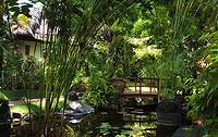 Wonderful shot of garden foliage with wooden bridge and lillies in pond